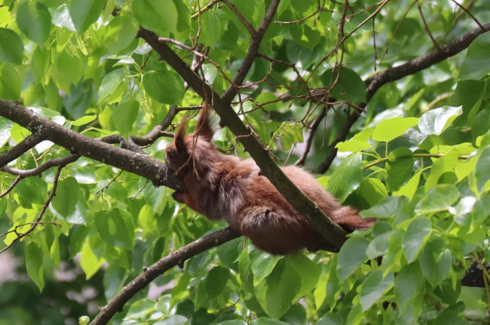 The squirrel's life in Cottbus